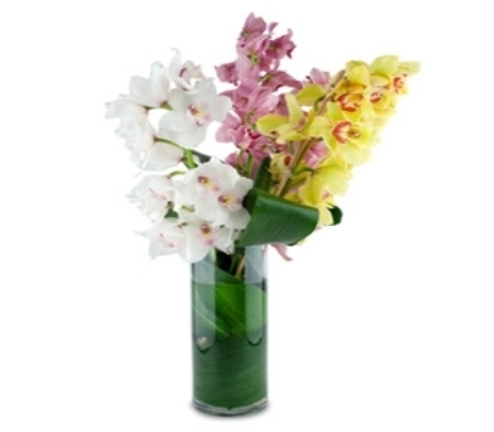Assorted Cymbidium Orchids in New York NY, A University Floral Design