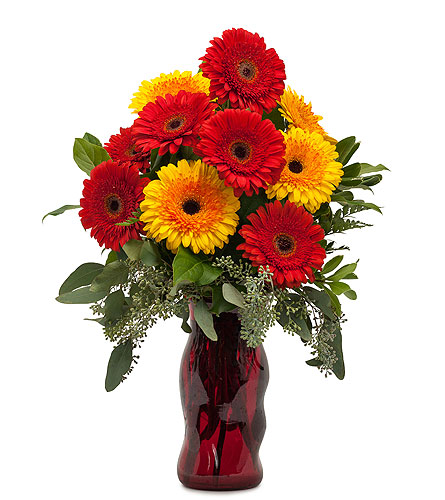 Mighty Gerberas in Inver Grove Heights MN, Glassing Florist