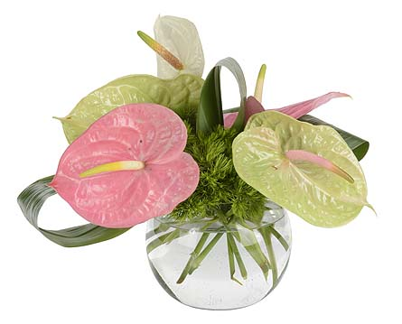 Anthurium Vase Arrg. in Oklahoma City OK, Trochta's
