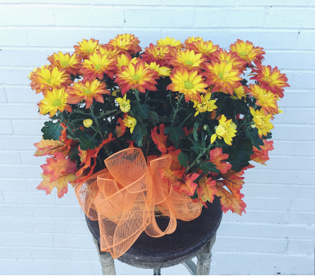 Double Mum Basket in Little Rock AR, Tipton & Hurst, Inc.
