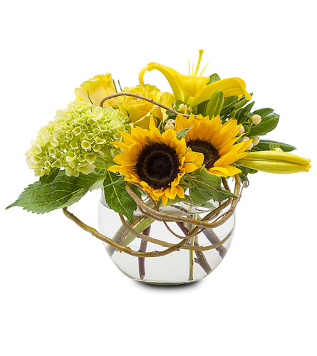 Rays of Sun in Brockton MA, Holmes-McDuffy Florists, Inc 508-586-2000