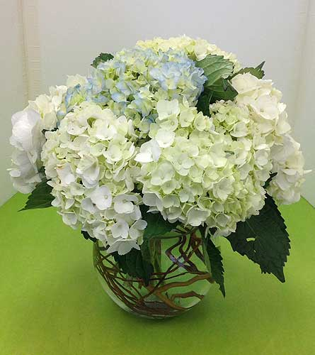 Bowl of Hydrangeas in Manhasset NY, Town & Country Flowers