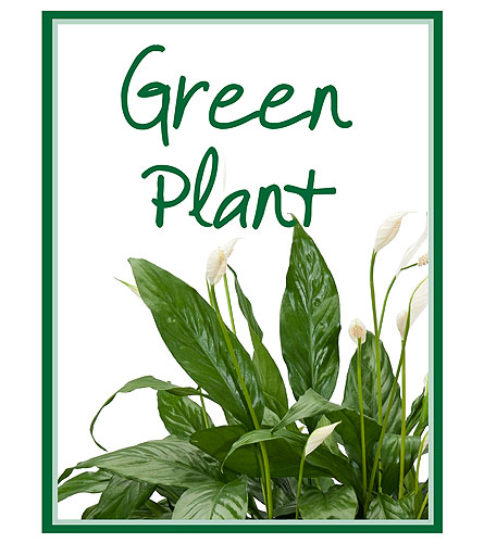 Green Plant Deal of the Day in Port Huron MI, Ullenbruch's Flowers & Gifts