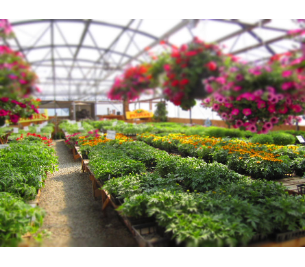 Store Gallery in Creston BC, Morris Flowers & Greenhouses