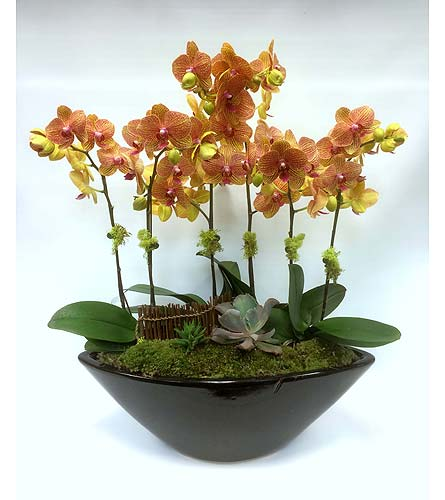 Orchid Garden (orange) in Belleville ON, Live, Love and Laugh Flowers, Antiques and Gifts