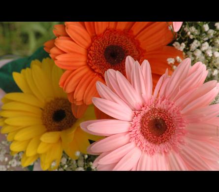 Bulk Flowers Delivery Bowmanville On Van Belle Floral Shoppes