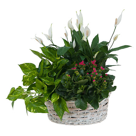 Living Garden Plant Basket in Holladay UT, Brown Floral