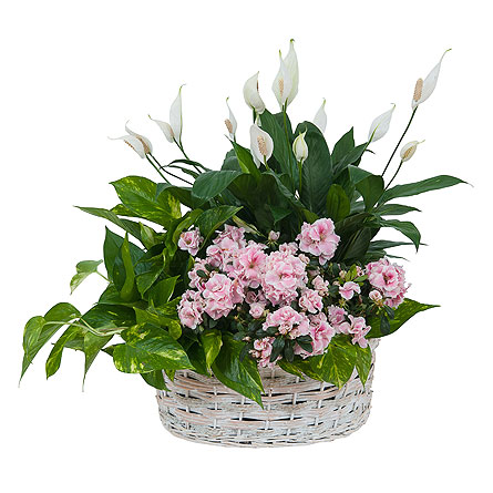 Living Blooming White Garden Basket in Augusta GA, Ladybug's Flowers & Gifts Inc