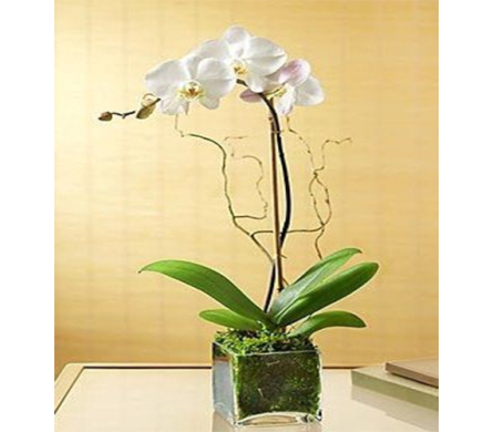 Exotic Orchid Planter in Indianapolis IN, George Thomas Florist