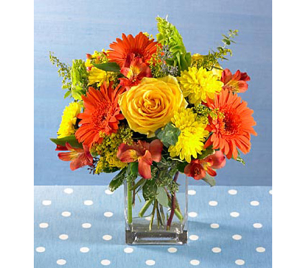 Splash of Orange          in Campbell CA, Citti's Florists
