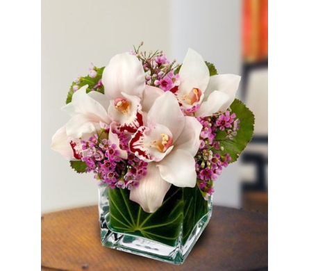 Lovely Orchids in Princeton, Plainsboro, & Trenton NJ, Monday Morning Flower and Balloon Co.