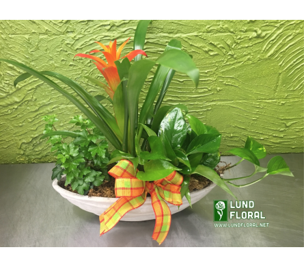 Bromeliad Wave Bowl-Chalk  in Ogden UT, Lund Floral