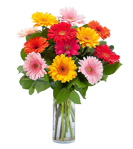 Grand Gerbera in Runnemede NJ, Cook's Florist