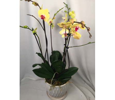 Orchids Delivery Bowmanville On Van Belle Floral Shoppes