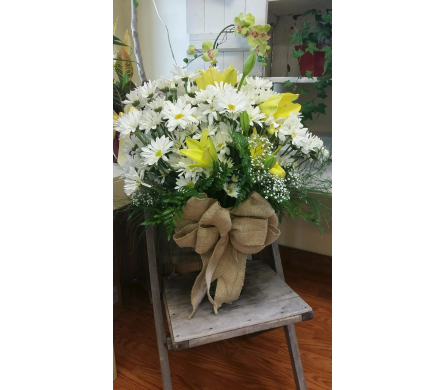 Daisies gone by in Eureka Springs AR, Holiday Island Flowers & Gifts