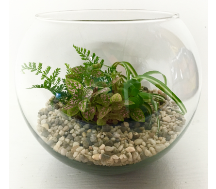Glass Bubble Bowl Terrarium in Wyoming MI, Wyoming Stuyvesant Floral