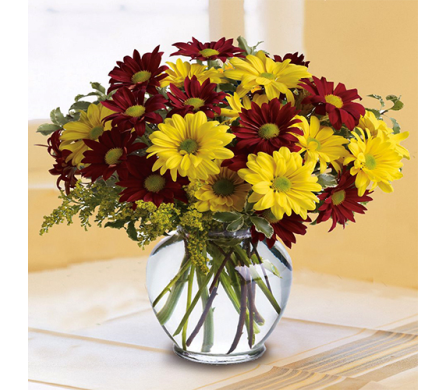 Fall for Daisies in Indianapolis IN, George Thomas Florist