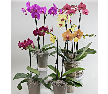 Single Orchid in Needham MA, Needham Florist