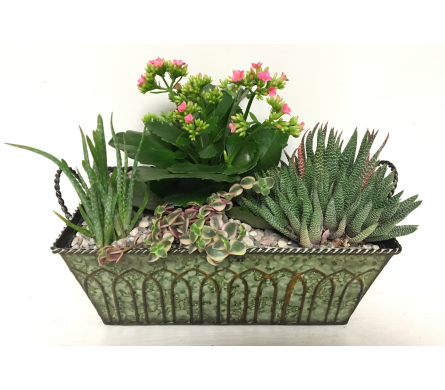 12-1/2 Rectangular Succulent Garden with Kalanchoe in Wyoming MI, Wyoming Stuyvesant Floral