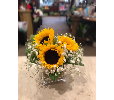 Sunny's Charm in Princeton, Plainsboro, & Trenton NJ, Monday Morning Flower and Balloon Co.