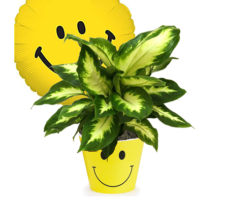 Happy Face Green Plant in Birmingham AL, Norton's Florist