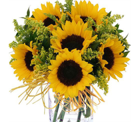 Lots of Sunflowers in Baltimore MD, Raimondi's Flowers & Fruit Baskets