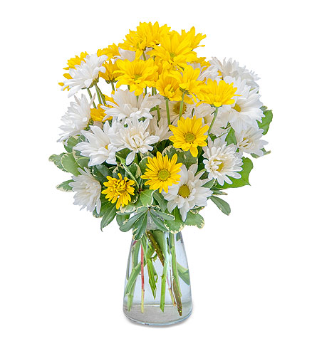 Dazed Daisies in Harrisonburg VA, Blakemore's Flowers, LLC