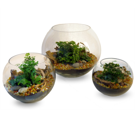 Thoughtful Terrariums in Indianapolis IN, McNamara Florist