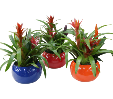 Bromeliad Garden by Country Greenery in Moorhead MN, Country Greenery
