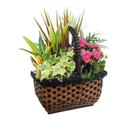 Small Zurich Planter in St Catharines ON, Vine Floral