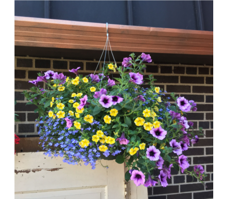 Large Hanging Basket in Eau Claire WI, Brent Douglas