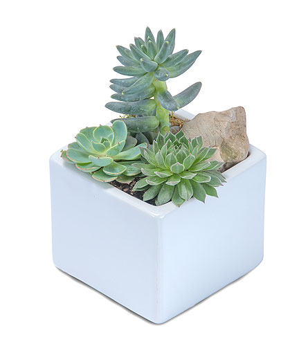 Mini Stunning Succulent in Freehold NJ, Especially For You Florist & Gift Shop