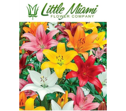 Little Miami Lily Bouquet in Columbus OH, OSUFLOWERS .COM
