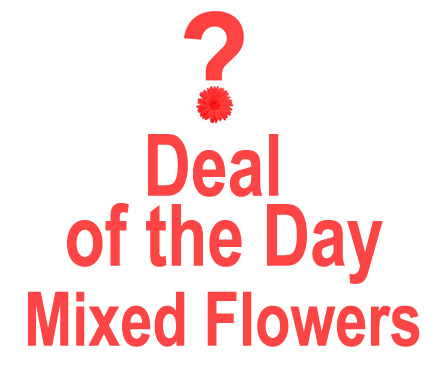 Deal of the Day in Ft. Lauderdale FL, Jim Threlkel Florist