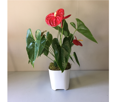 Modern Flamingo Lily in Walla Walla WA, Holly's Flower Boutique