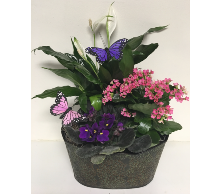 Summer Solstice Oval Metal Planter-10-1/2x7-1/2 in in Wyoming MI, Wyoming Stuyvesant Floral