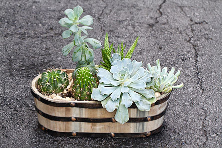 Cactus Crate in Kingston ON, Pam's Flower Garden