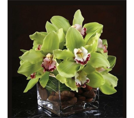 Lux Orchid in Needham MA, Needham Florist