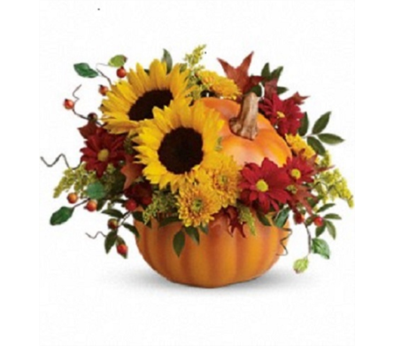 Pumpkin Patch in Big Rapids, Cadillac, Reed City and Canadian Lakes MI, Patterson's Flowers, Inc.