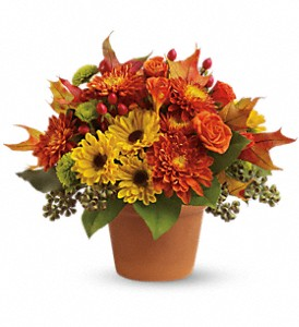 Sugar Maples in Orwell OH, CinDee's Flowers and Gifts, LLC