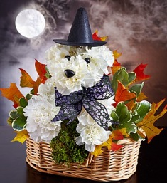 Witchy Pooch in Camp Hill and Harrisburg PA, Pealer's Flowers