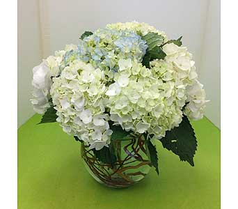 Bowl Of Hydrangeas In Manhasset NY, Town U0026 Country Flowers