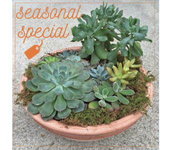 Succulent Garden Special in Merion PA, Long Stems
