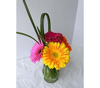 Fiesta Gerbera in Muskegon MI, Wasserman's Flower Shop