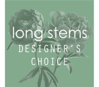 Long Stems Designer's Choice of the Day in Merion PA, Long Stems