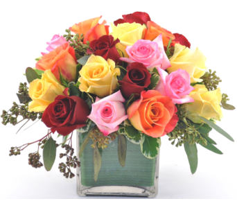 Rose Cube Assorted in Knoxville TN, Crouch Florist & Gift