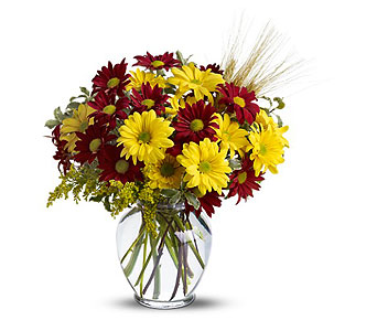 Fall For Daisies Bouquet in Duluth MN, Engwall Florist & Greenhouses, Inc.
