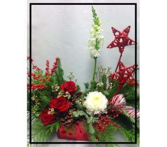 Star bright in Vermilion AB, Fantasy Flowers