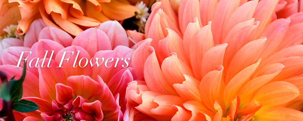 Send Spring flowers to Niagara On The Lake, ON with Van Noort Florists, your local florists