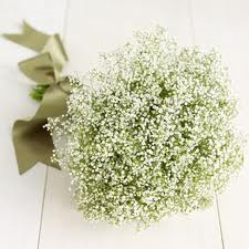 Fall flowers for the month of september find a florist babys breath a classic filler this beautiful white flower can be used to decorate a romantic bouquet a corsage or boutonniere mightylinksfo Gallery